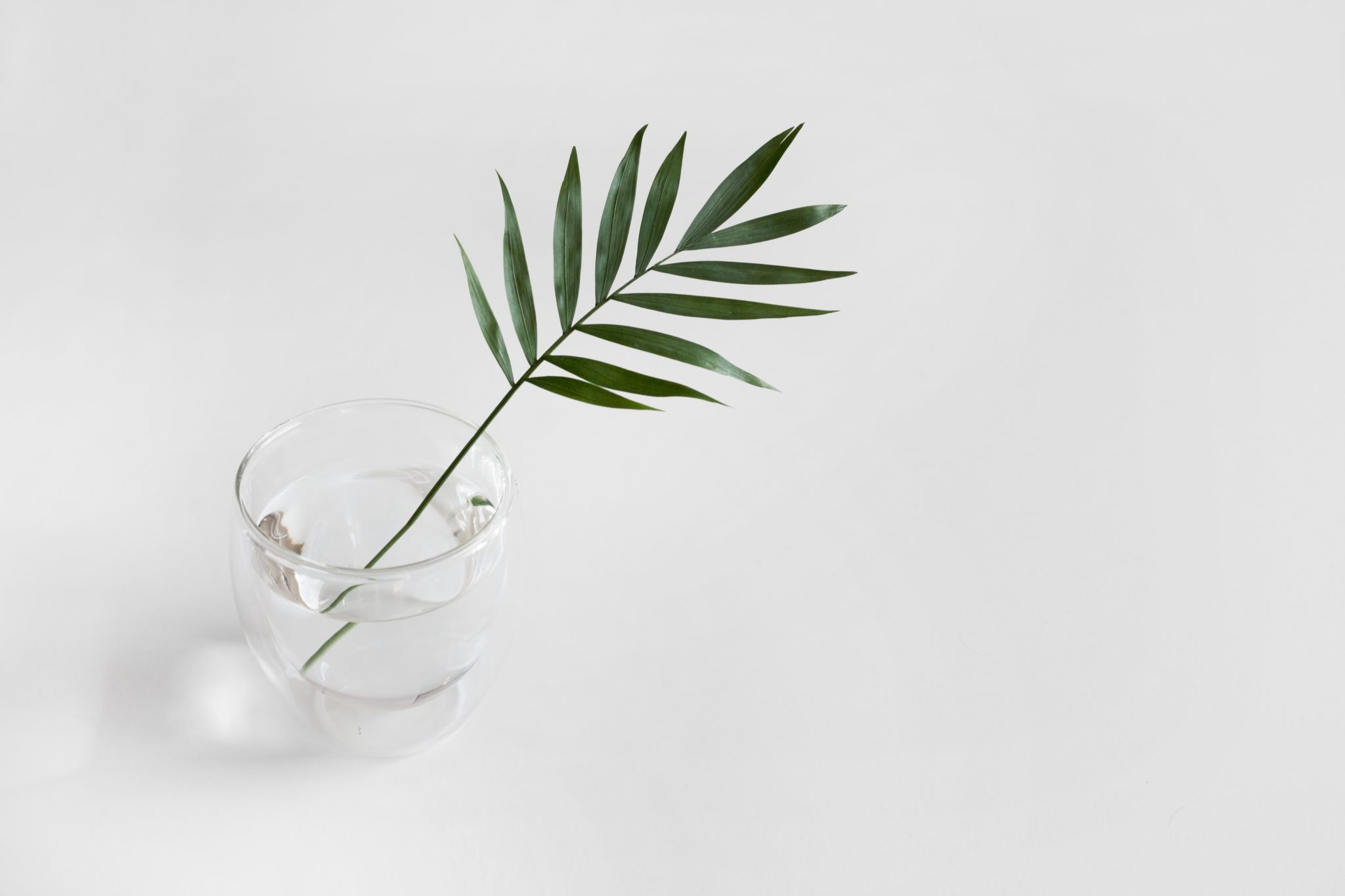 Kasvi maljakossa valkoisella taustalla